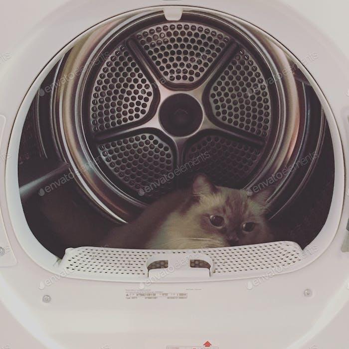 Gato escondido en la secadora.