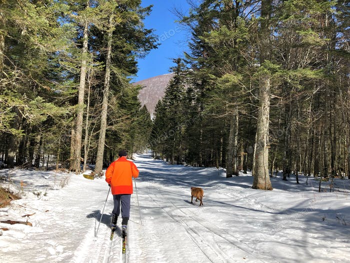 Man skiing, dog following, nature, exploring nature, sport, recreation, cross country skiing