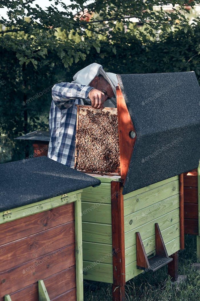 Beekeeper working in apiary