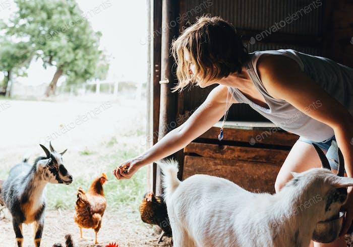 Frühstückszeit für die Tiere auf dem Bauernhof.