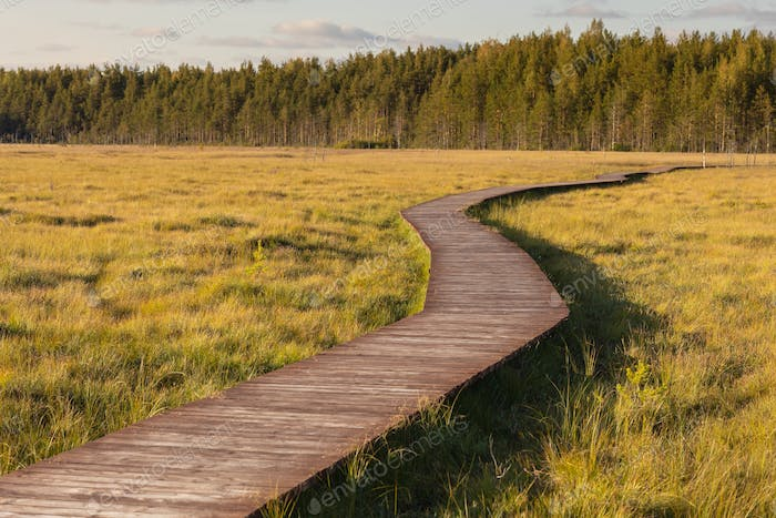 view of a wooden eco trail made of wood for walks in the woods or swamp to gather mushrooms