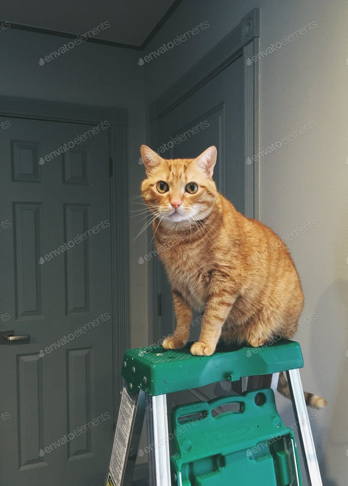Cats on ladders.