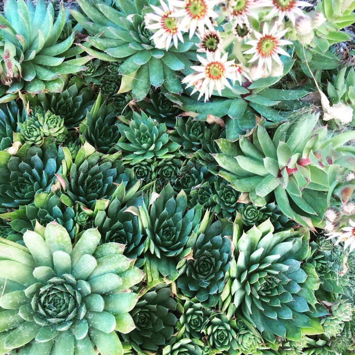 Succulent Backdrop