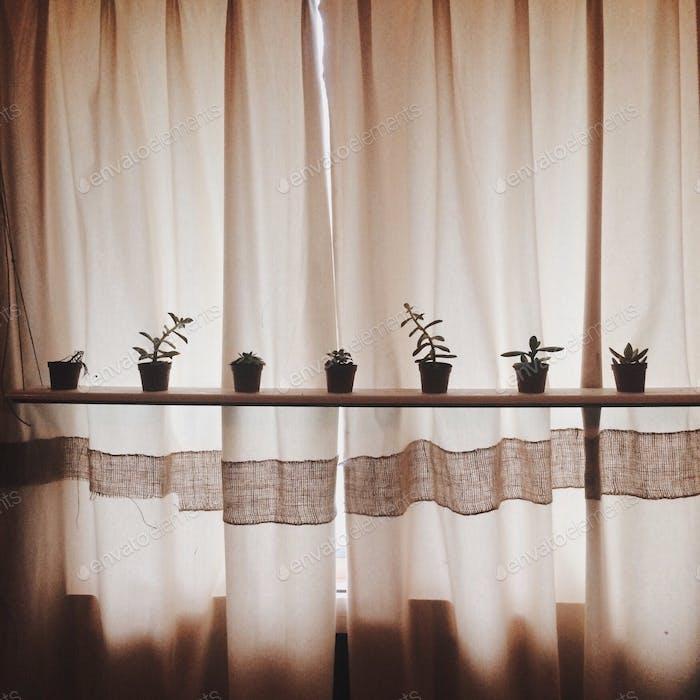 Pflanze kumpals 🌿🌱