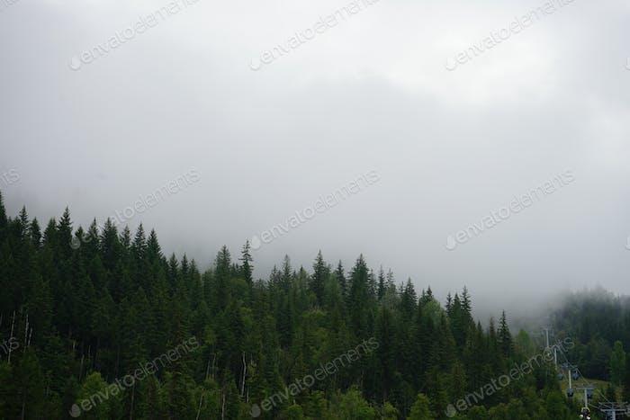 Tiempo en niebla