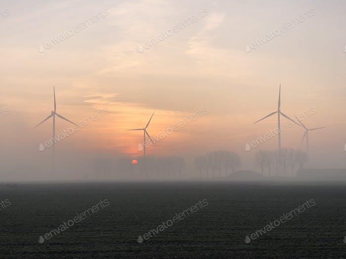 Morning mist in wintertime