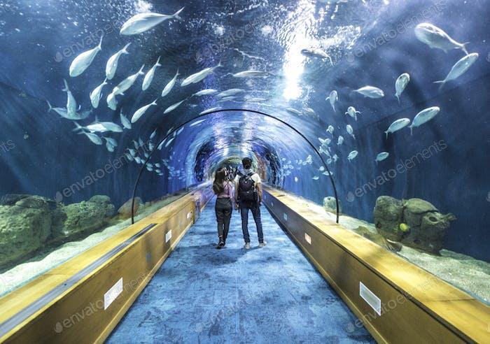 Paar im Aquarium