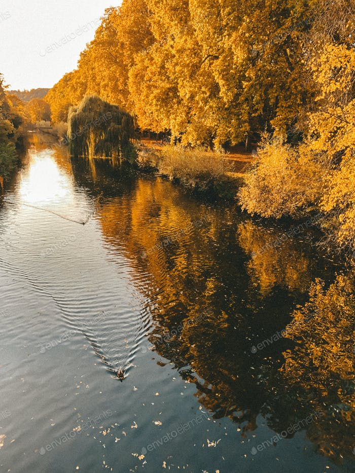Golden autumn in the town