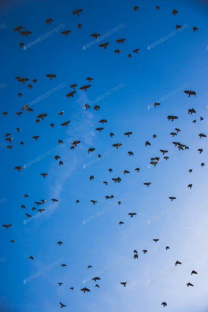 Blue sky filled with flock of birds