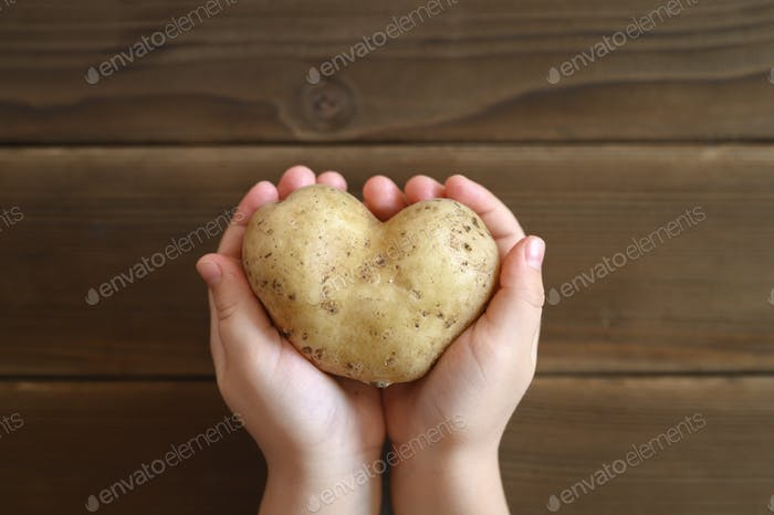 ugly food. kid's hands holding ugly vegetable a heart shaped potato on a wooden plank table