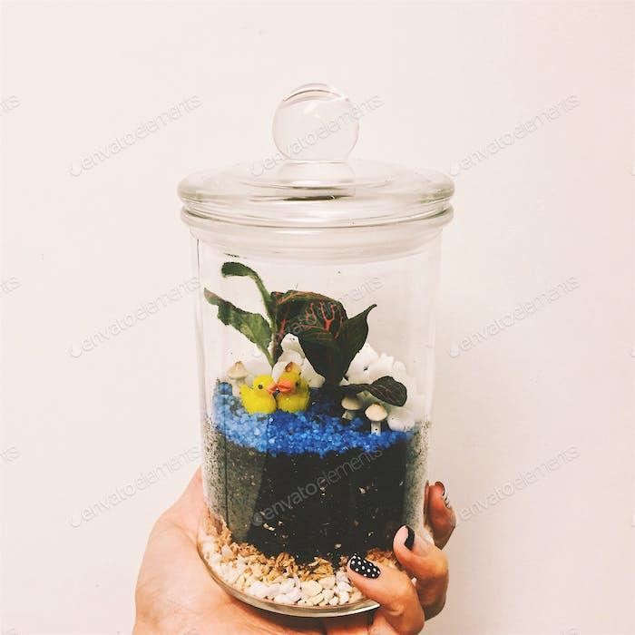 Built my own terrarium!