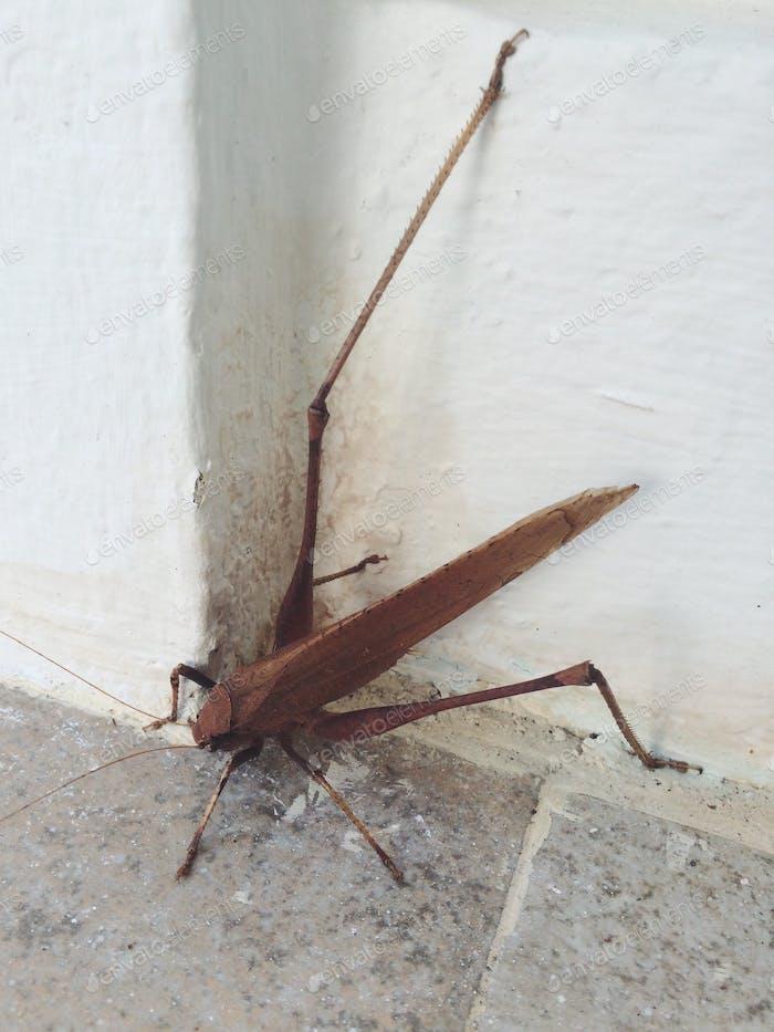 Riesiges Insekt