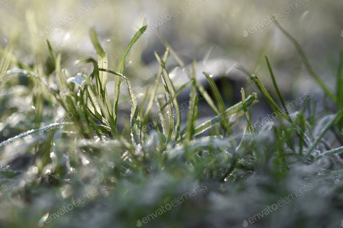 Closeup macro of frost on grass