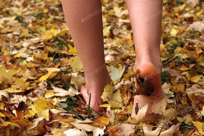 Bare in autumn