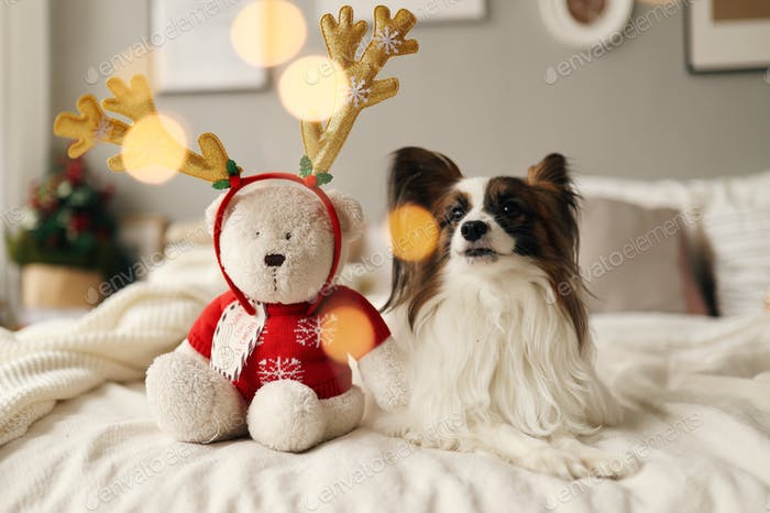 Pet, animal, dog, doggy, Christmas, toy, home, holiday, bed, cozy vibe, friends