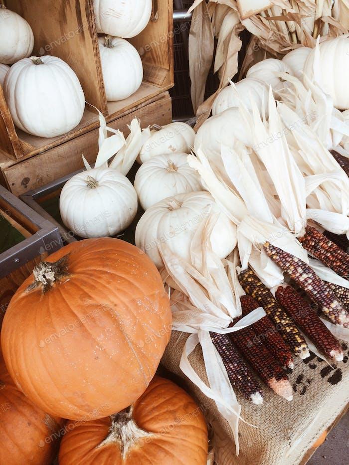 Fall vegetables on market, pumpkins, corncobs