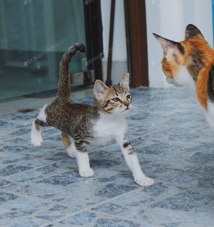 Nettes Kätzchen zu Fuß, um seine Mutter zu treffen