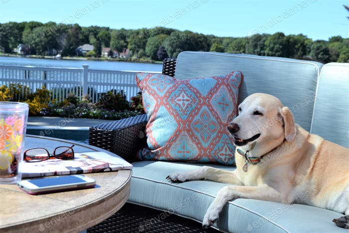 Outdoor living space! 🐶 nominated 💕