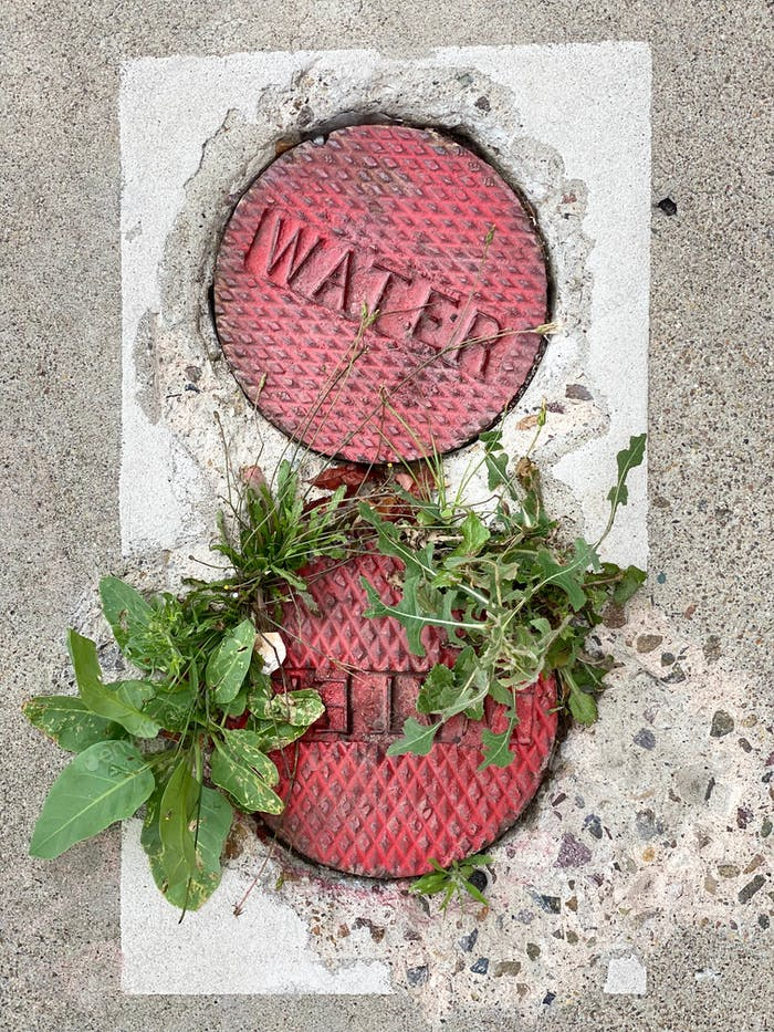 Plants and weeds growing through the cement cracks by the water pipes in the ground.