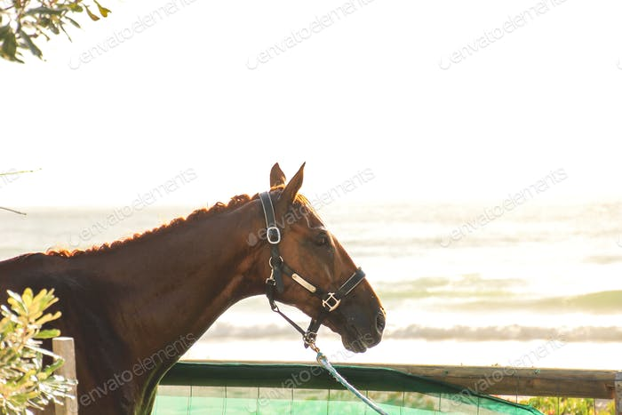 portrait of a beautiful horse at the beach, thoroughbred racehorse