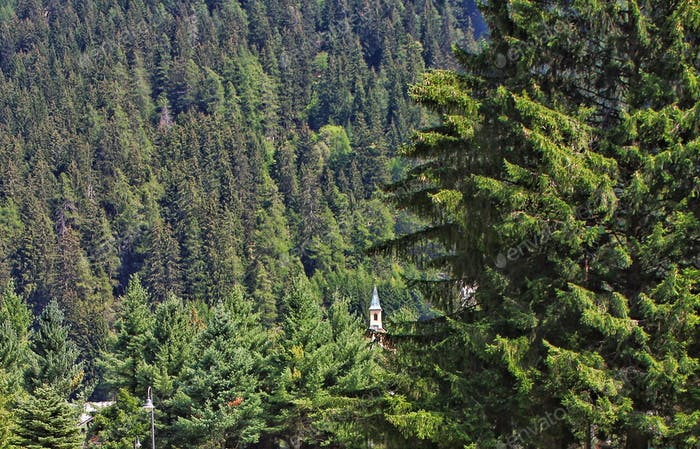 Mountain conifer forest