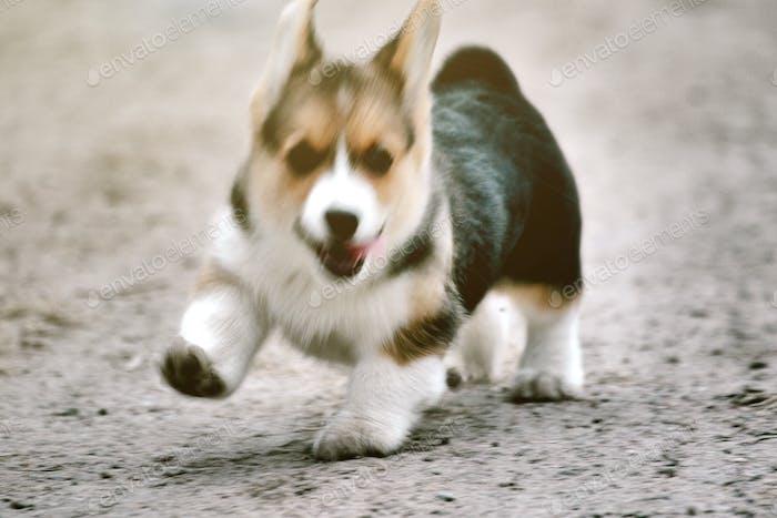 Running dog - blurry