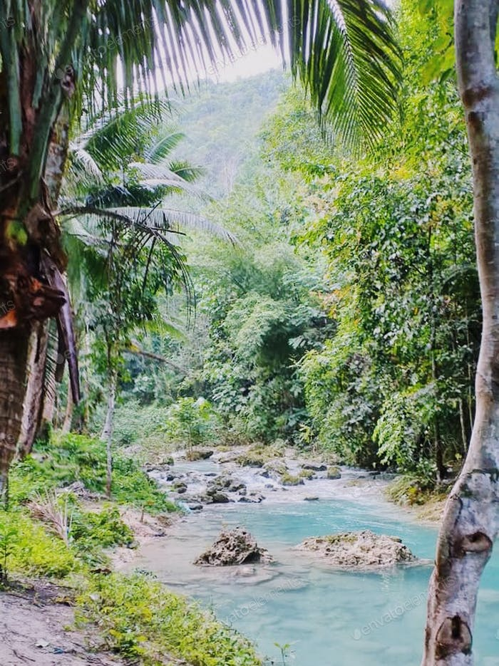 Jungle view with a blue river water