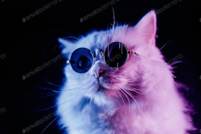 Portrait of white furry cat in fashion eyeglasses