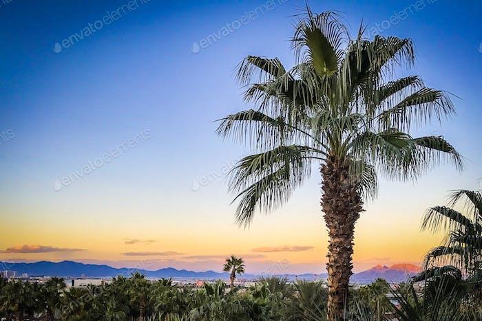 Vegas Palm Tree