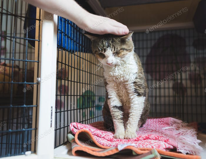 Volunteering with Cats