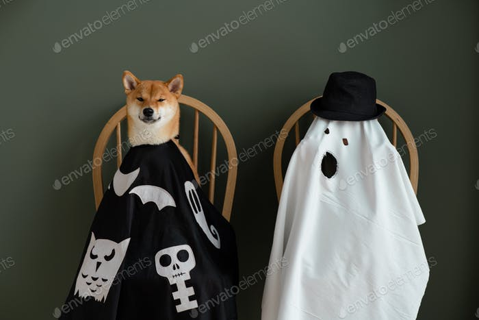 Happy Halloween! Funny cloaked dog and boy in ghost costume posing for Halloween