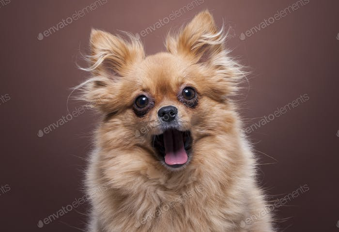 Dog looks like it's laughing out loud
