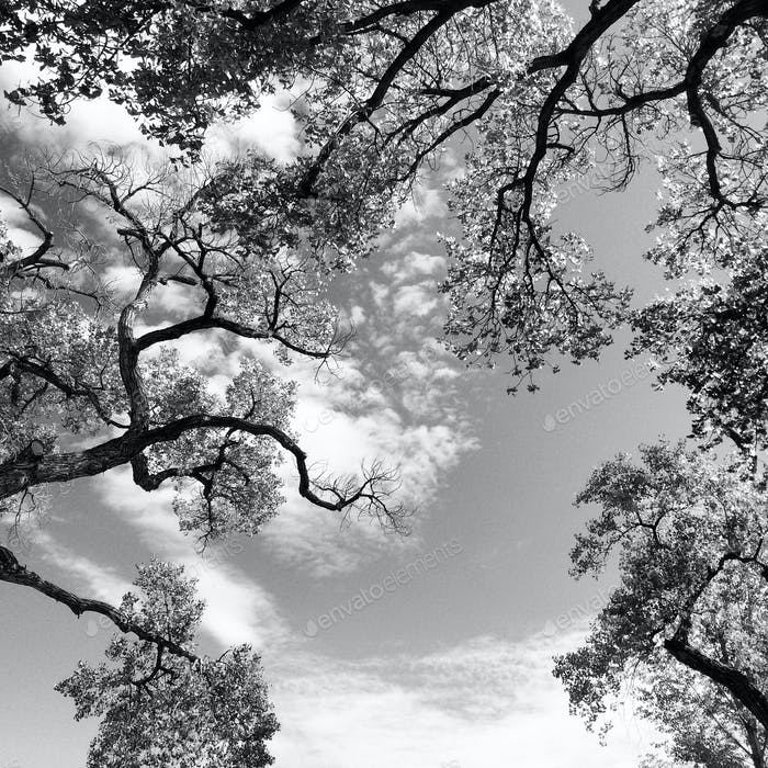 BNW Old Cottonwoods in Shady Lakes Albuquerque NM Sept 2014