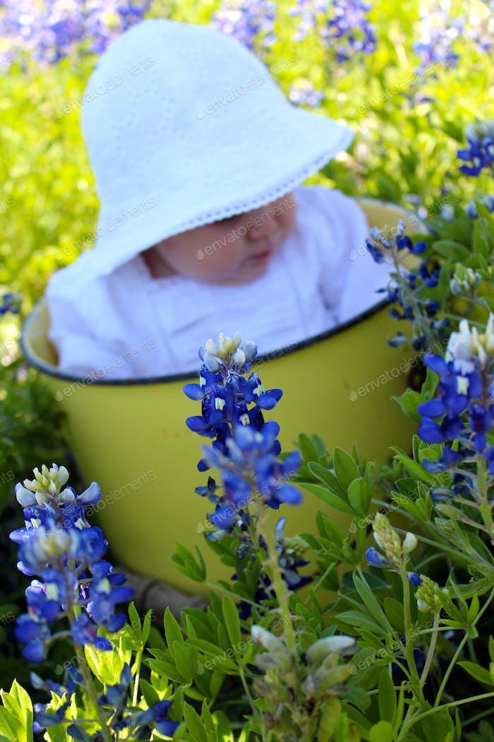 Little Miss in the Bluebonnets in Texas