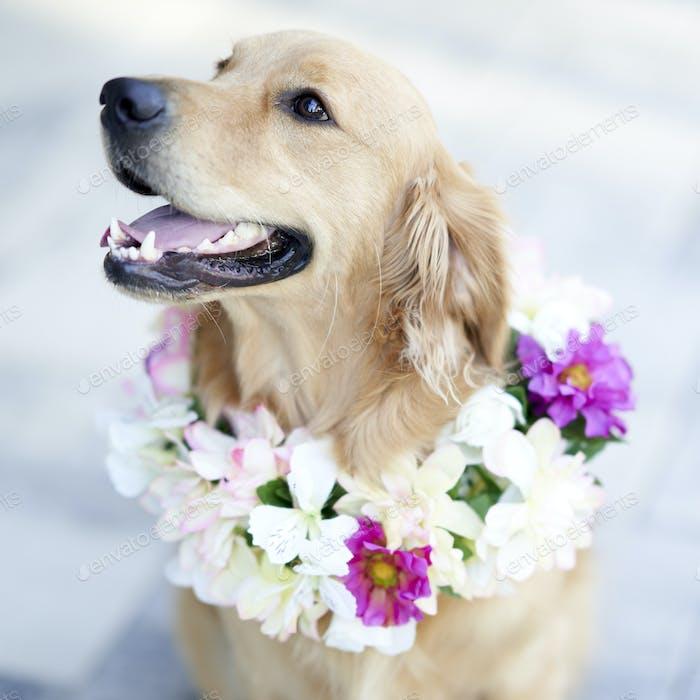 Blume-Thema