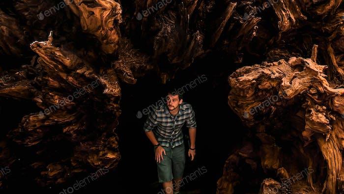 Falling Sequoia