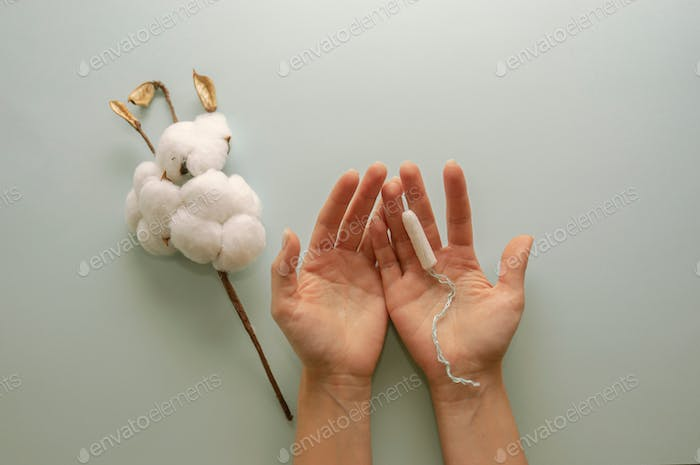 A branch of cotton and a white sanitary tampon in women's hands. Hygien and health concept