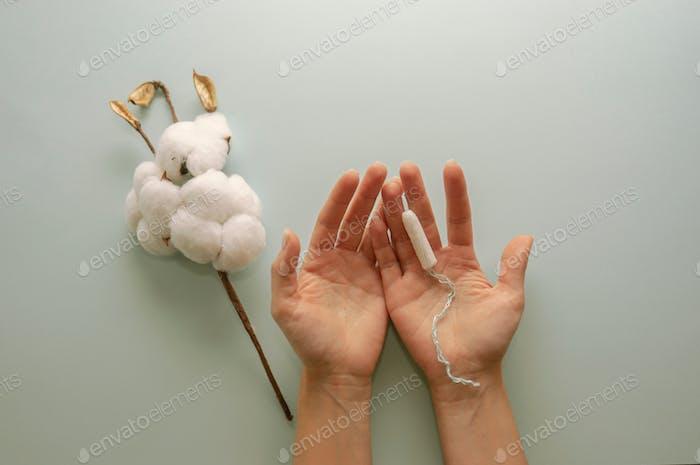Ein Zweig aus Baumwolle und ein weißer Sanitär-Tampon in den Händen der Frauen. Hygien und Gesundheitskonzept