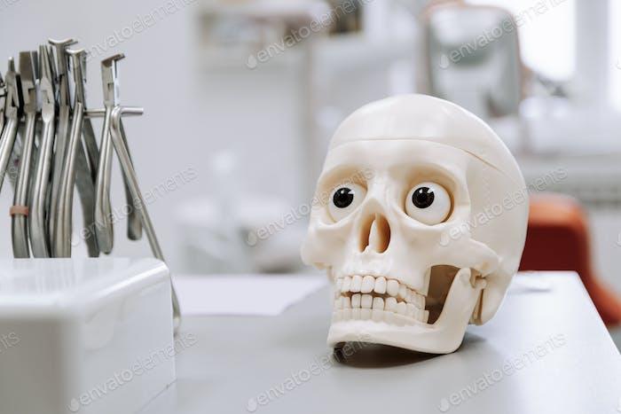 Selective focus of dental model and tools, jaw, teeth, dentist, orthodontist.