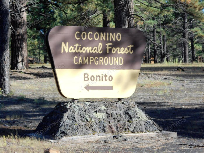 Coconino National Forest, Benito campground, Flagstaff, Arizona.