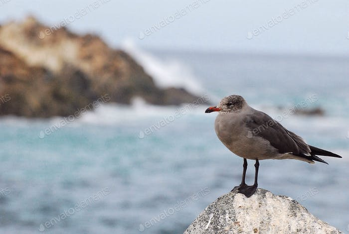Lone gull in Monterey...