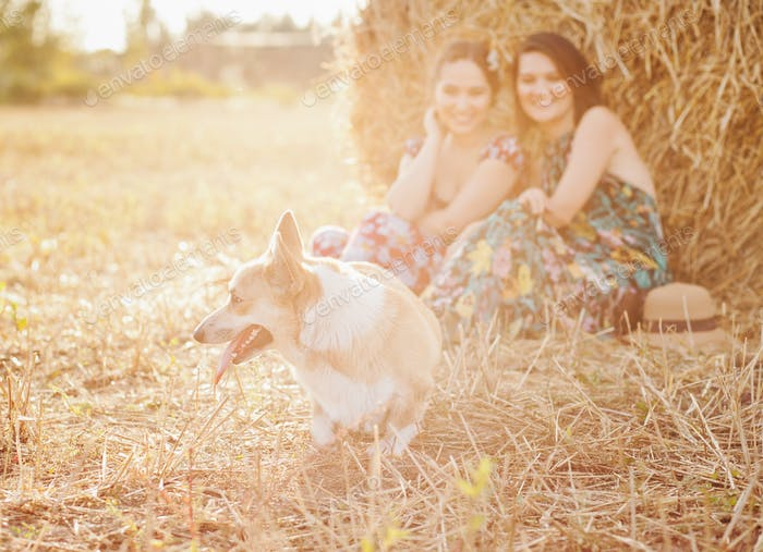 Corgi with two women in the hayfield, countryside lifestyle