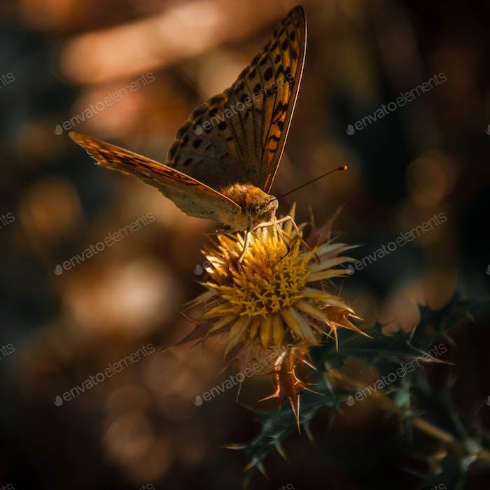 Little butterfly.