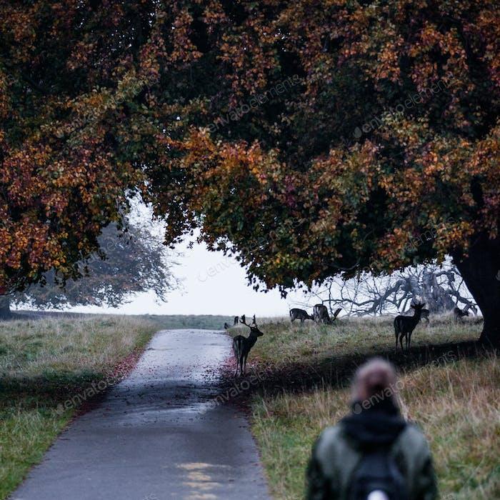 Fall in the Deer Park in Copenhagen