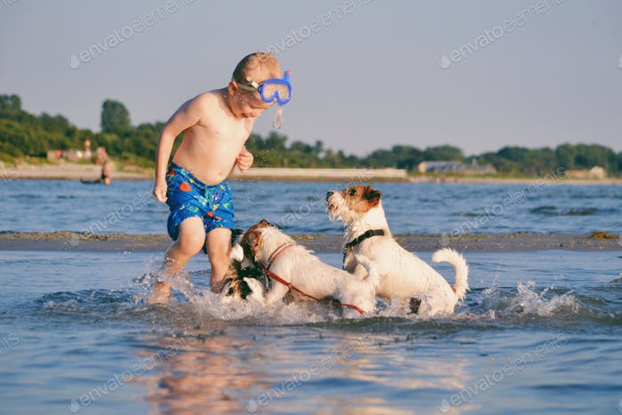 Boy playing with dogs at the beach