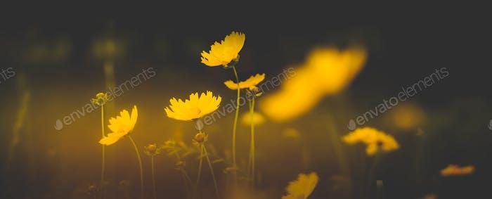Campos de floración
