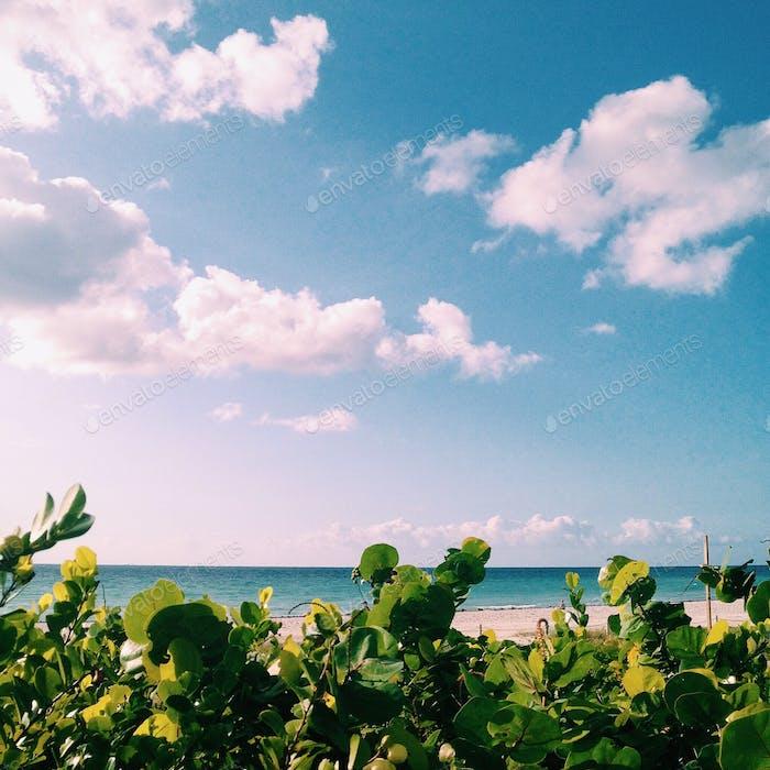South Beach Promenade 🌴 © 2016