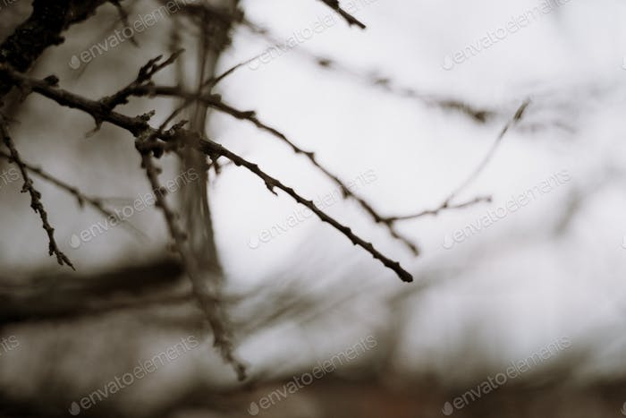 Moody tree wallpaper