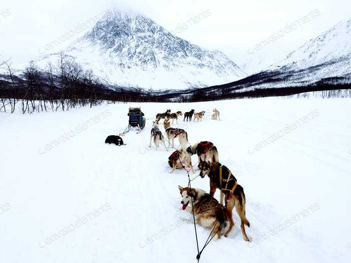 Husky sledding in Norway