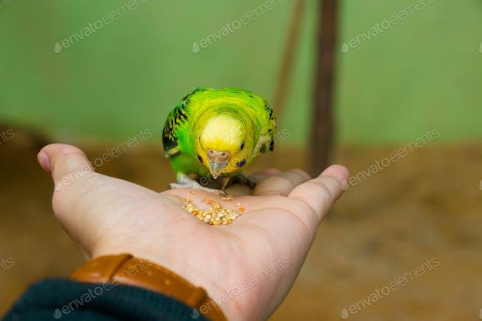 Feeding little birdie on my hand
